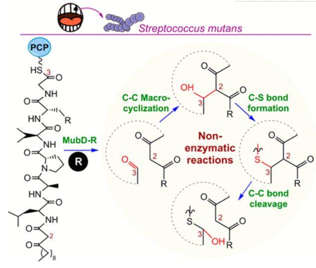 微生物所陈义华组OL|还原酶激动C-C、C-S键的形成及C-C键的断裂-脂肽类化合物Mutanobactin的生物合成研究