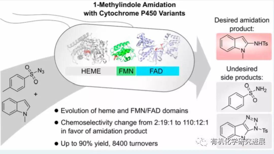 定向进化血红素蛋白实现吲哚化学选择性的酰胺化